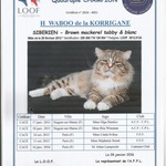 magnifiques chatons siberiens loof a reserver - miniature 3