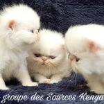 chatons white points