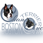 elevage familial de boston terrier