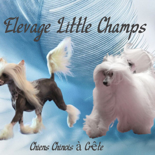 élevage little champs